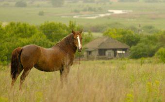 У нас нет запасной лошади